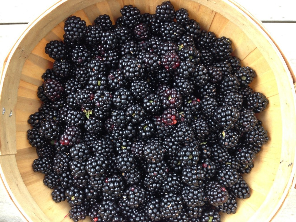 fresh blackberry basket close