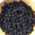 fresh blackberry basket close